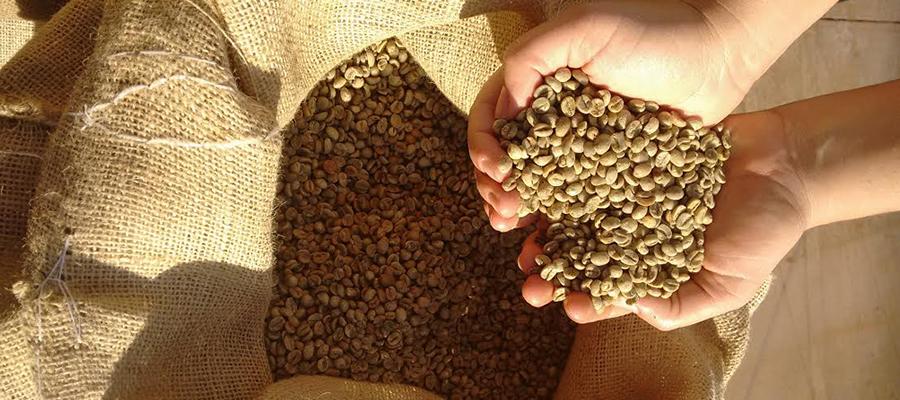 Bolay Avelar – Swiss Coffee Merchant – Green Coffee, Roasted